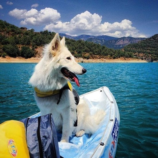 Disfruta con tu perro en Kayak