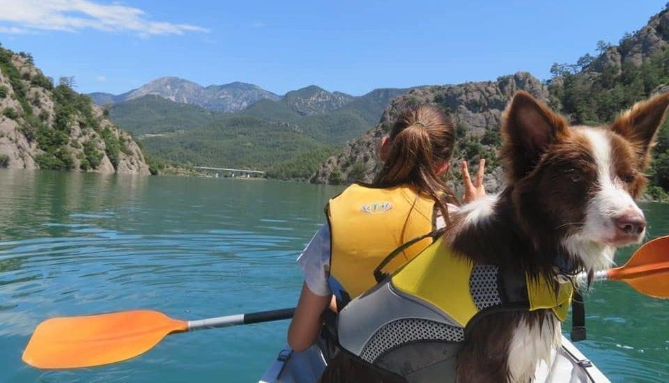 Alquilar Kayak con perro